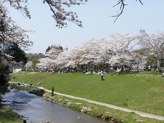 宝ヶ池近くの小川.jpg